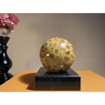 Medium Fossil Coral Sphere