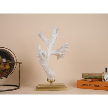 Coral Acropora florida