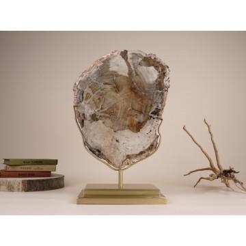 Petrified tree slice