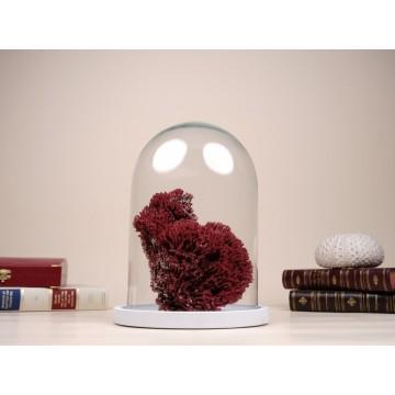 Natural Red pipe organ coral