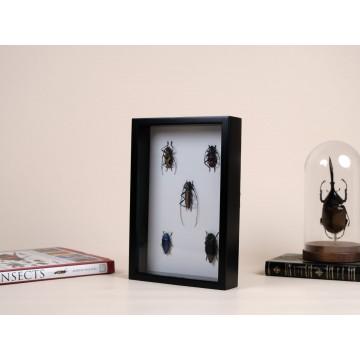 Five Coleoptera in frame