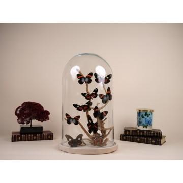Butterflies from Peru dome