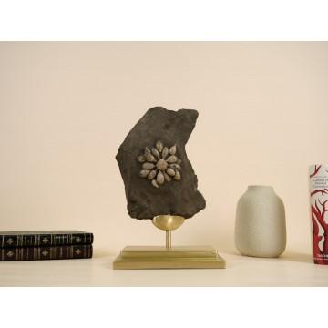 Fossil sea urchin -...