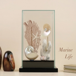 Marine Life Glass vitrine with black lacquered wood base, displaying:   Orange gorgonia, from 🇵🇭  Stylopora pistillata coral, from Solomon islands  Nautilus pompilius polished and one half cutted both, from 🇵🇭  Coelopleura maillardi sea urchin, from Philippines  White Sea star, from Florida 🇺🇸  One of a Kind handmade piece ⚡️  #orangegorgonian #stylopora #pistillatacoral #nautiluspompilius #seaurchin #whiteseastar #oneofakind #jaspe #marinelife #glassvitrine #marinedecor #homedecor #interiordesign #interiorismo #designpieces #uniquepieces #sealovers #peçasdecorativas #beoneofakind